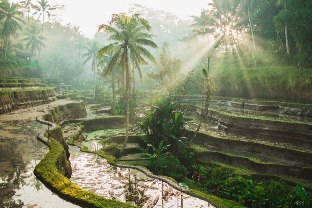 Beautiful sunrise over famous balinese landmark Tegalalang rice terraces