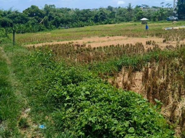 Beautiful Land For Sale Bali In Canggu Freehold Lands